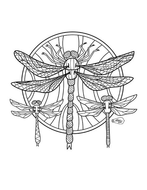 dragonfly coloring page 405 best dragonfly images on