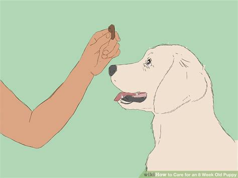 7 week puppy care how to care for an 8 week puppy with pictures wikihow