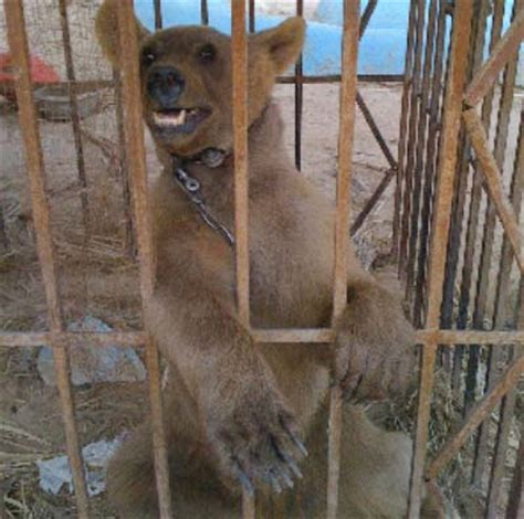 P 3116 Fork Animal Friends the saved 2 48am everything kuwait