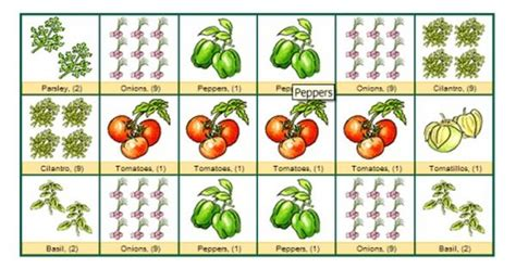Salsa Garden Layout Shown As Well As Other Layouts Shown Salsa Garden Layout
