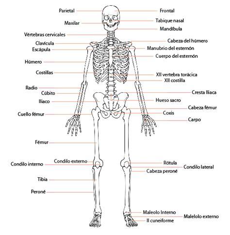 imagenes realistas del cuerpo humano huesos del cuerpo humano science pinterest anatomy