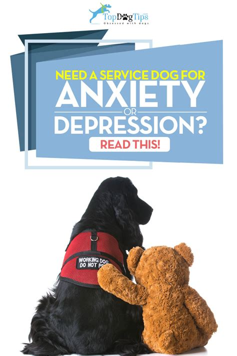 service dogs for anxiety and depression how to get a service for anxiety or depression the costs of it