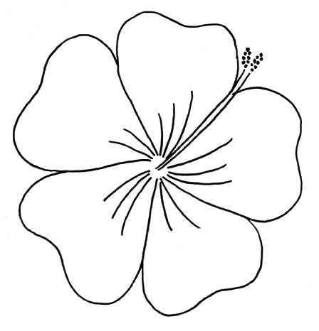 Hibiscus Outline Clipart Best Hawaiian Flower Template