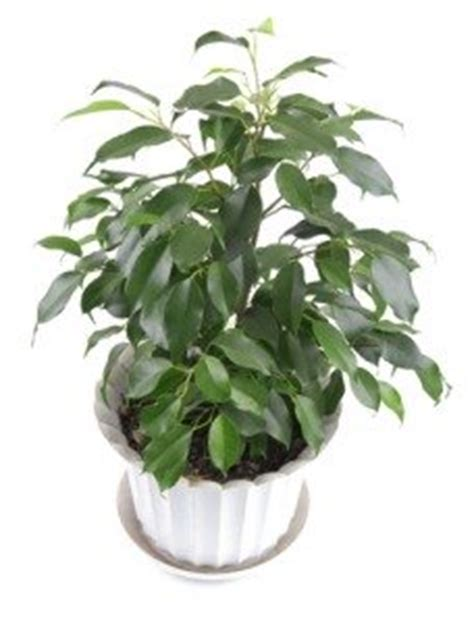 name of common house plant large house plants house plants