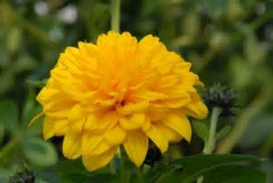 i m surrounded by yellow flowers sunshine daydreams