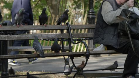 park bench wing pigeons and park bench birds in new york city in