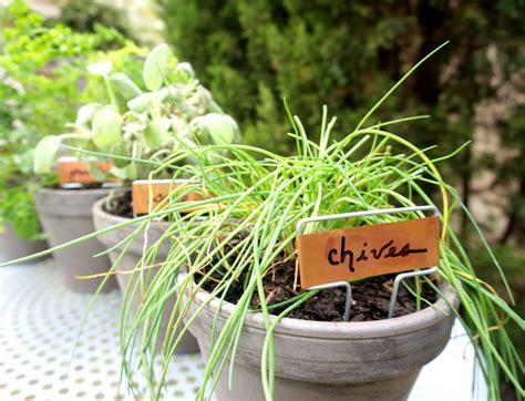 diy herb garden an easy tabletop diy herb garden
