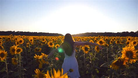 backs   sunflowers   skies image  stock