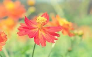 flower pictures weneedfun