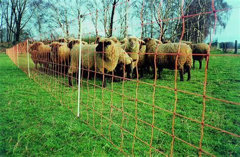 Schafhaltung Im Garten by Schafnetze Schafhaltung Tierzucht Agrarflora Alles F 252 R Haus Hof Feld Und Garten