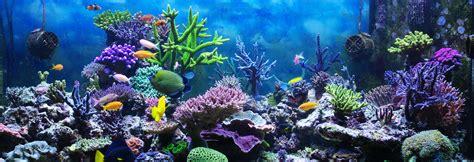 aquarium design seatech aquariums scottsdale valley wide