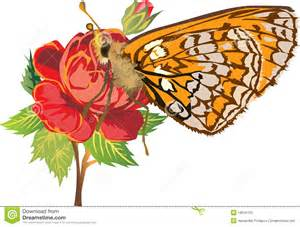 yellow butterfly on red rose flower stock photos image