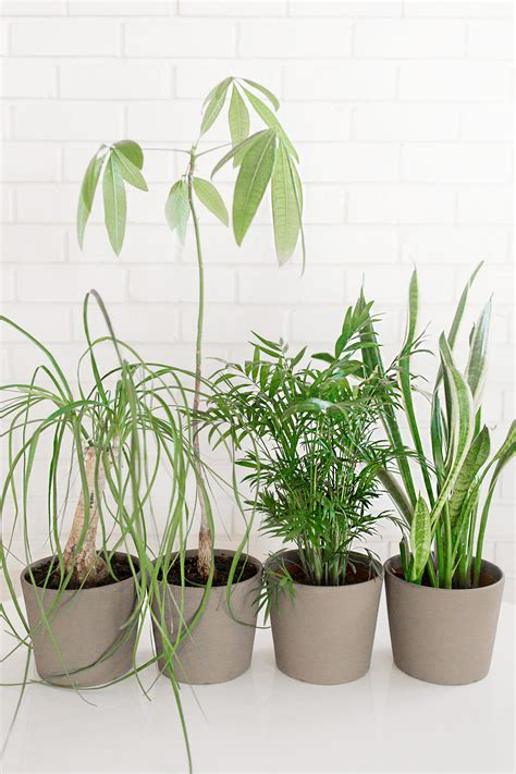 easy indoor plants easy to care for indoor plants