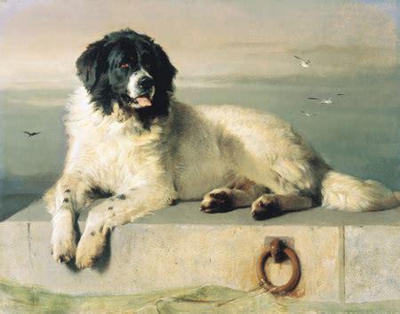 boatswain a dog poole and the newfoundland dog poole museum society blog