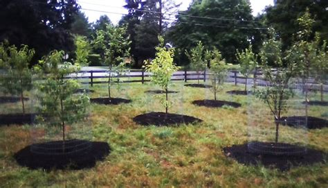 backyard orchard design best 25 orchard design ideas on pinterest small garden