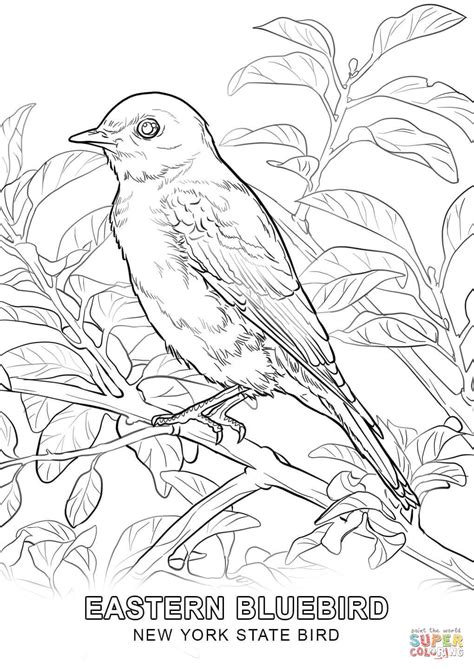 coloring page new york new york state bird coloring page free printable