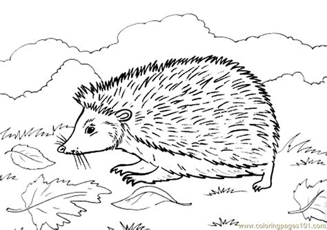 free coloring pages of adult hedgehogs