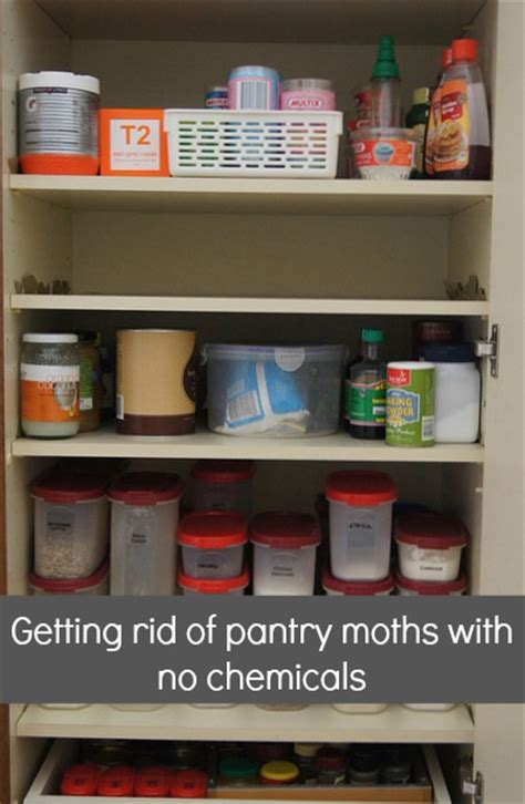 How To Keep Moths Out Of The Pantry by Reorganising The Pantry And Getting Rid Of Pantry Moths