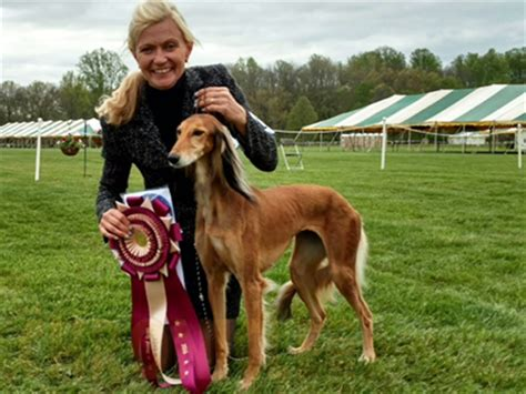 hound results breeds picture