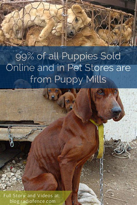 facts about puppy mills puppy mills facts