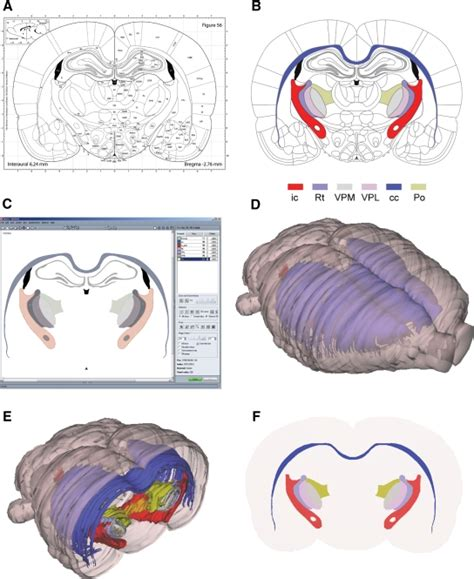 rat brain coronal sections three dimensional atlas system for mouse and rat brain