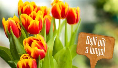tulipani in vaso tulipani in vaso come farli quot durare quot di pi 249 leitv