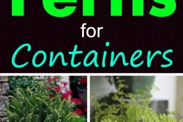 your701 com home 11 best indoor vines and climbers you can grow easily in
