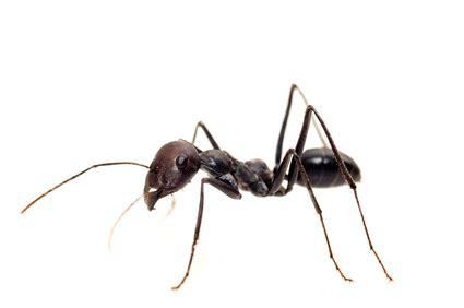 Was Hilft Gegen Ameisen 3890 by Hausmittel Gegen Ameisen