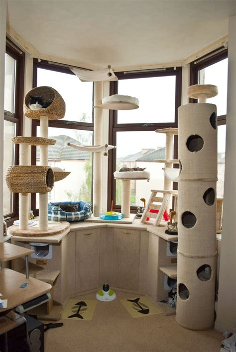cat room mancat mancave is mancat mansion cat lifestyle mousebreath magazine