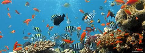 fishes   ocean animals photo facebook cover
