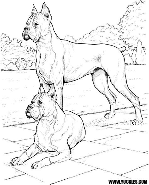 Boxer Puppy Coloring Pages boxer coloring page by yuckles