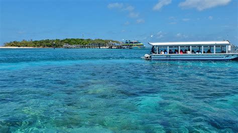 cairns glass bottom boat reef tours glass bottom boat tour great barrier reef great adventures