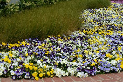 Landscaping Ideas With Pansies Pdf Pansy Garden Ideas