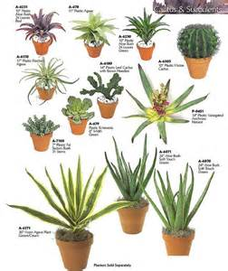 types of indoor plants cacti and succulents cactus and types of succulents on pinterest