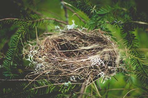 7 interesting facts about how birds nest birds and blooms