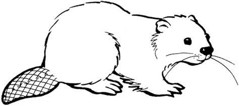 beaver template beaver coloring beaver coloring