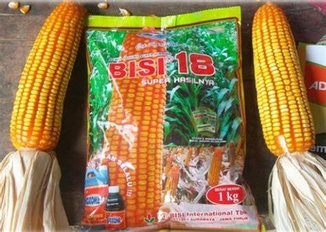 Bibit Jagung Hibrida Bisi 222 budidaya jagung bisi 18