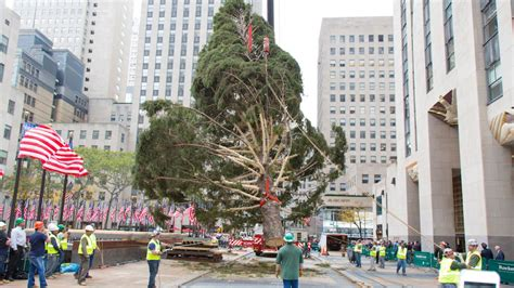 when do they take down the rockerfella christmas trees secrets of the rockefeller center tree am new york