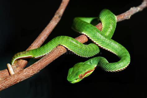 groene slang stock afbeelding afbeelding bestaande uit