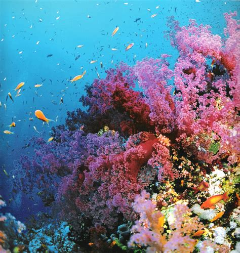 the the great barrier reef of australia its products and potentialities containing an account with copious coloured and photographic illustrations and coral reefs pearl and pearl shell bãªch books australia â englishoå aca