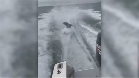 man dragged shark behind boat investigation into passaic nj carbon monoxide that killed