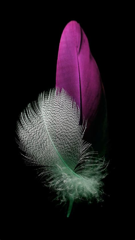 huawei p lite feather wallpapers wallpapers feathers