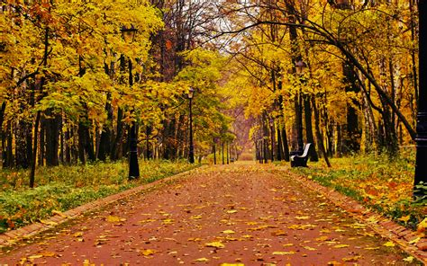 fall bench park bench in autumn wallpaper wide wallpaper collections