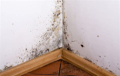 basement black mold preventing toxic mold everdry toledo