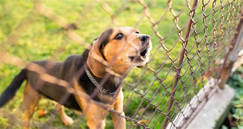 how to keep your puppy from biting how to keep from biting fence information about cats and kittens