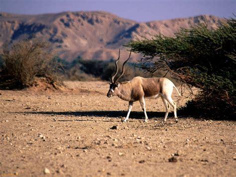 endangered animals  africa