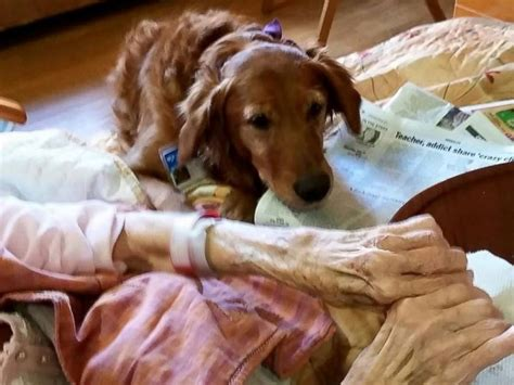 jj s dogs hospice therapy comforts dying patient in heartwarming abc news