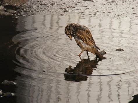 images of love birds in rain lonely mother bird i m so lonely