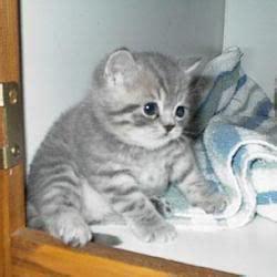 jackie jokes unborn baby could be brad s kidspot kitten catster