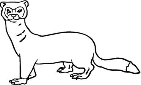 ferret 4 coloring page super coloring